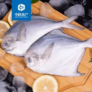 中科水产小鲳鱼