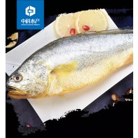 中科水产大黄花鱼