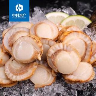 中科水产扇贝肉